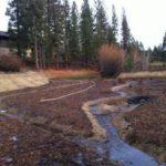 11-12_wetland